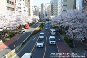 渋谷橋からの眺め