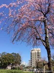 この日はいいお天気でした!