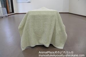 タオルで目隠しをします。