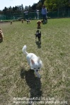 AnimalPlaza犬のようちえん® inunositukekyousitu-shirokane.com